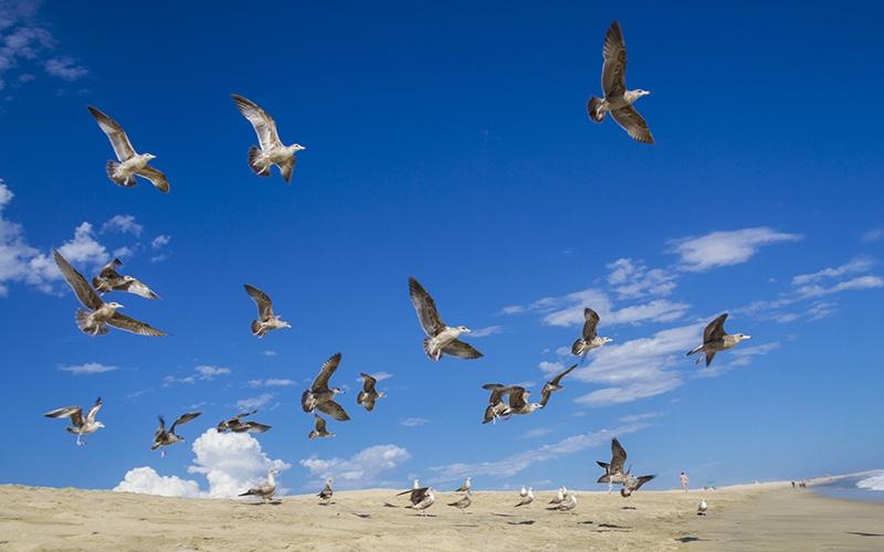 danto_solano_danto.solanoj@gmail.com_baja_california_sur_los_cabos_viaje_avion_vacaciones_aventura_21k_carrera_playa_atardecer_amanecer_el_arco_ballenas_9